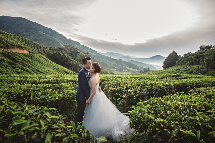 Pre Wedding at Cameron Highlands
